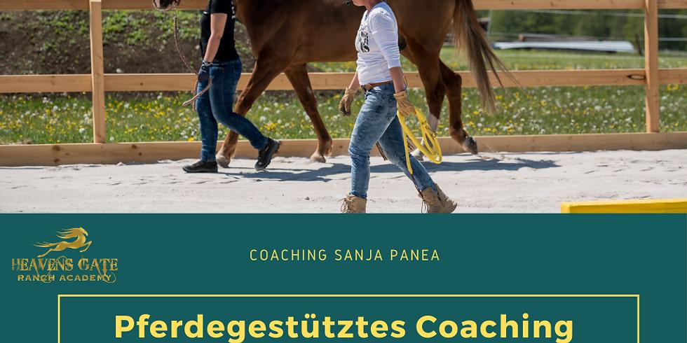 Pferdegestütztes Coaching  /2 Tages Coaching / 25.11./26.11.21 /Für Führungskräfte & Unternehmer