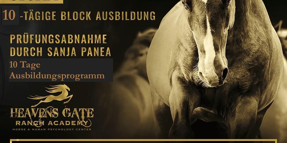 Ausbildung Horsemanship Instruktor 09.08 - 18.08.21 Blockausbildung