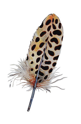 Spotted Feather Greeting Card