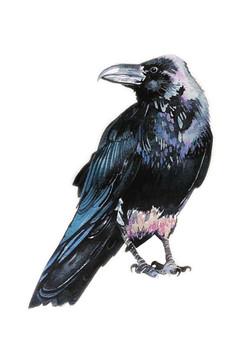 Raven Friend