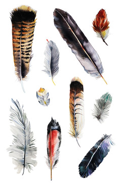 Local Feathers