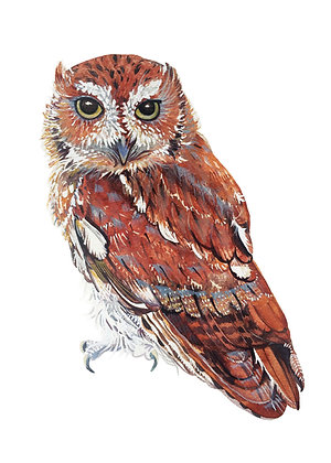 Owl Presence Greeting Card