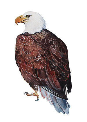 Eagle Guide Greeting Card