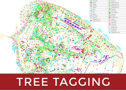Tree Tagging Survey