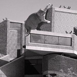 Earl W. Brydges Library Cat.jpg
