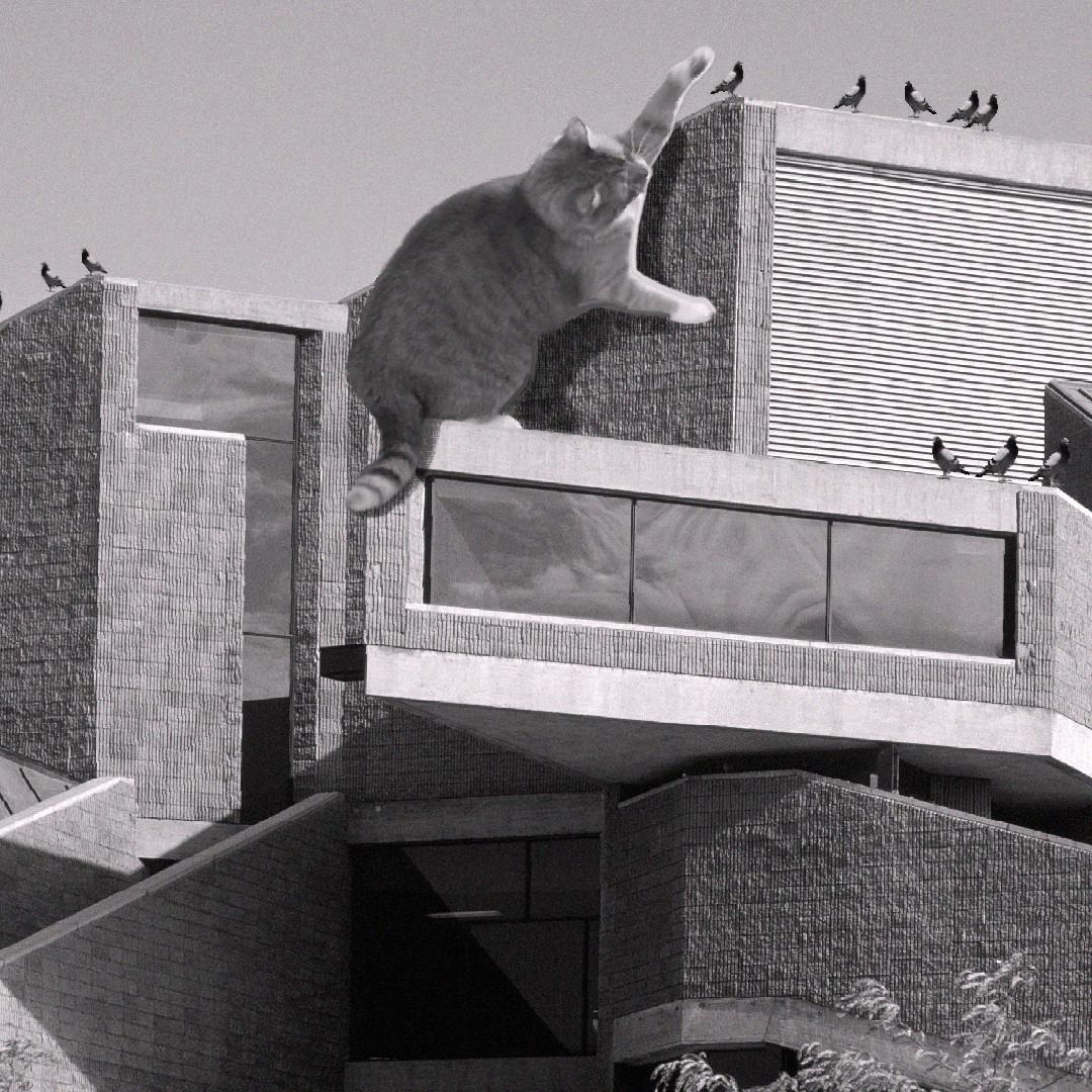 www.catsofbrutalism.com