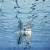 Vile Parle Diving Competition