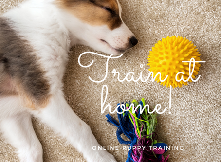 Can I train my puppy in a face-to-face group class now?