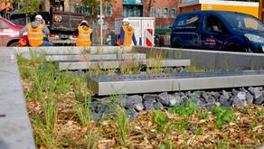 Urban Water Buffer maakt Cromvlietpark klimaatadaptief