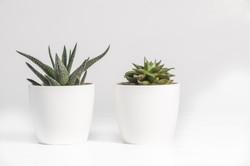 aloe-vera-and-succulent-plant-in-white-c