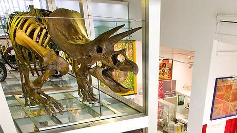 Triceratops-Dinosaur-at-Ulster-Museum_15