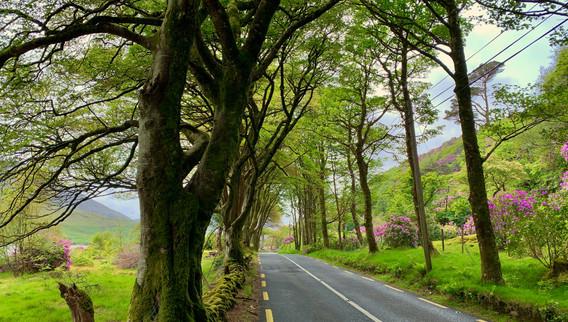 N59 near Kylemore Abbey