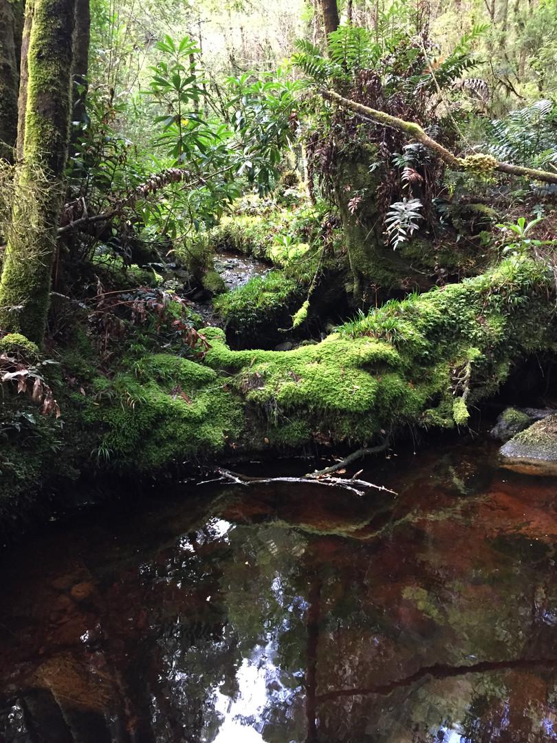 Tanin waters of Tasmania's Western Wilds
