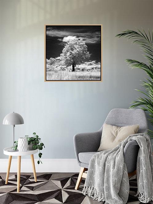 Delta Tree