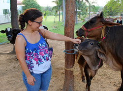 Enjoying the Desi cows at the farm.