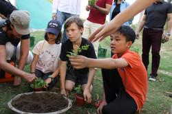 Planting baby saplings at the farm.