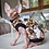 Thumbnail: Giddy Up- Sphynx Cat Top
