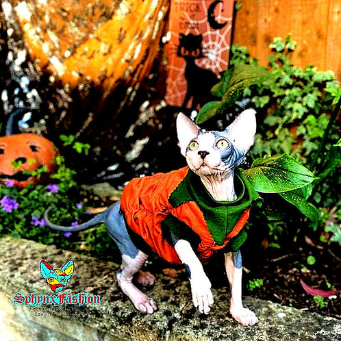 Pumpkin - Sphynx Cat Top