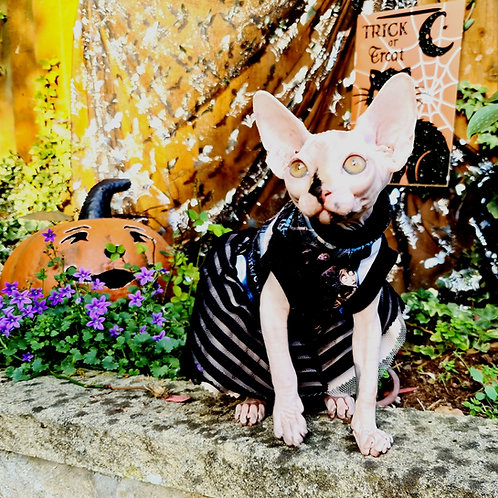 Corpse Bride Cotton Knit - Sphynx Cat Dress