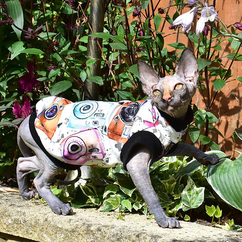 Say Cheese Cotton Knit - Sphynx Cat Jumper