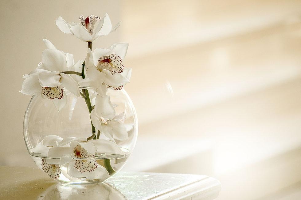 orchid-3178759.jpg