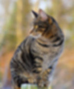 cat-1940487_960_720.jpg
