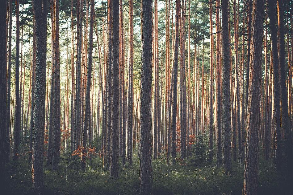 trees-1209088_1920.jpg