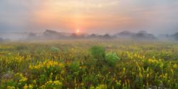 Golden Rod Sunrise