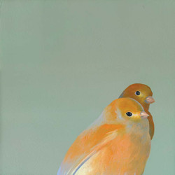 canary-pair_web.jpg