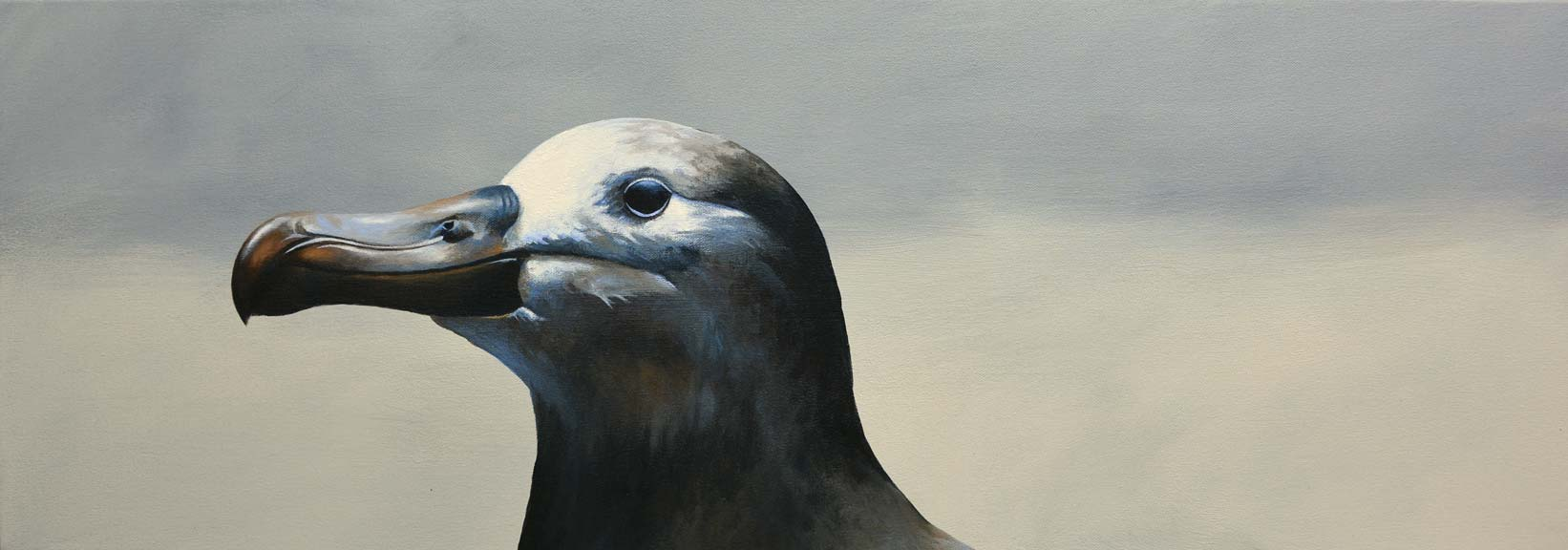 albatross_web.jpg