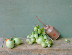 Green Tomatoes and Oil Can