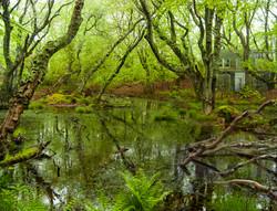Squam Swamp
