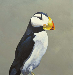 crested-puffin_web.jpg