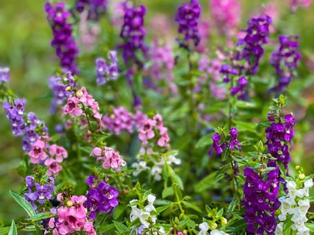 Summer Flowering Plants for the Landscape Garden