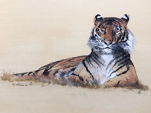 Un-framed Original Gouache Painting Tiger