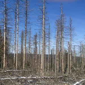 Död skog = farlig plats
