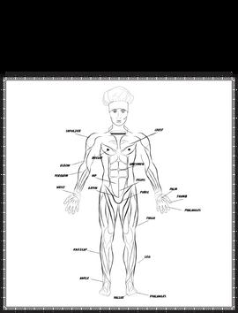 Anatomy Poster of Apollo