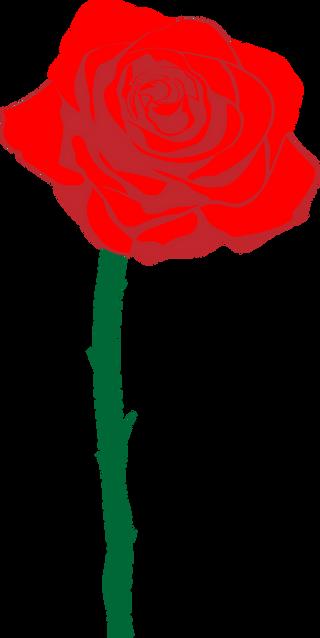Red Rose for Yellow Magnolia, Illustrator