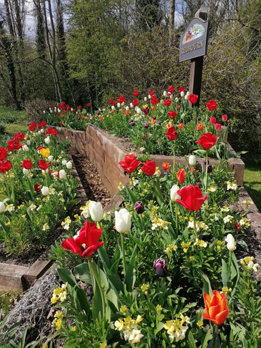 Spring (5) Nicky Line Planter 30.4.21.jpg