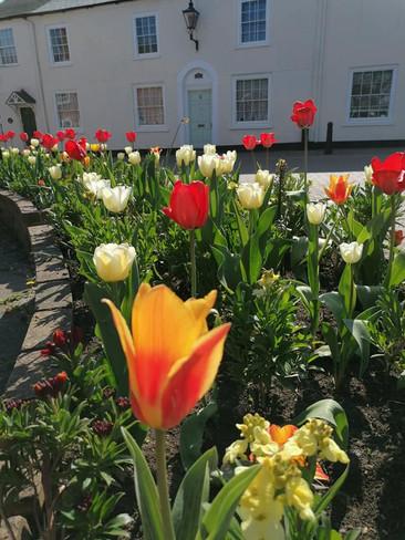Spring (4) Opposite Fire Station 19.4.21.jpg