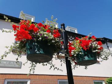 Hanging Baskets (5).jpg