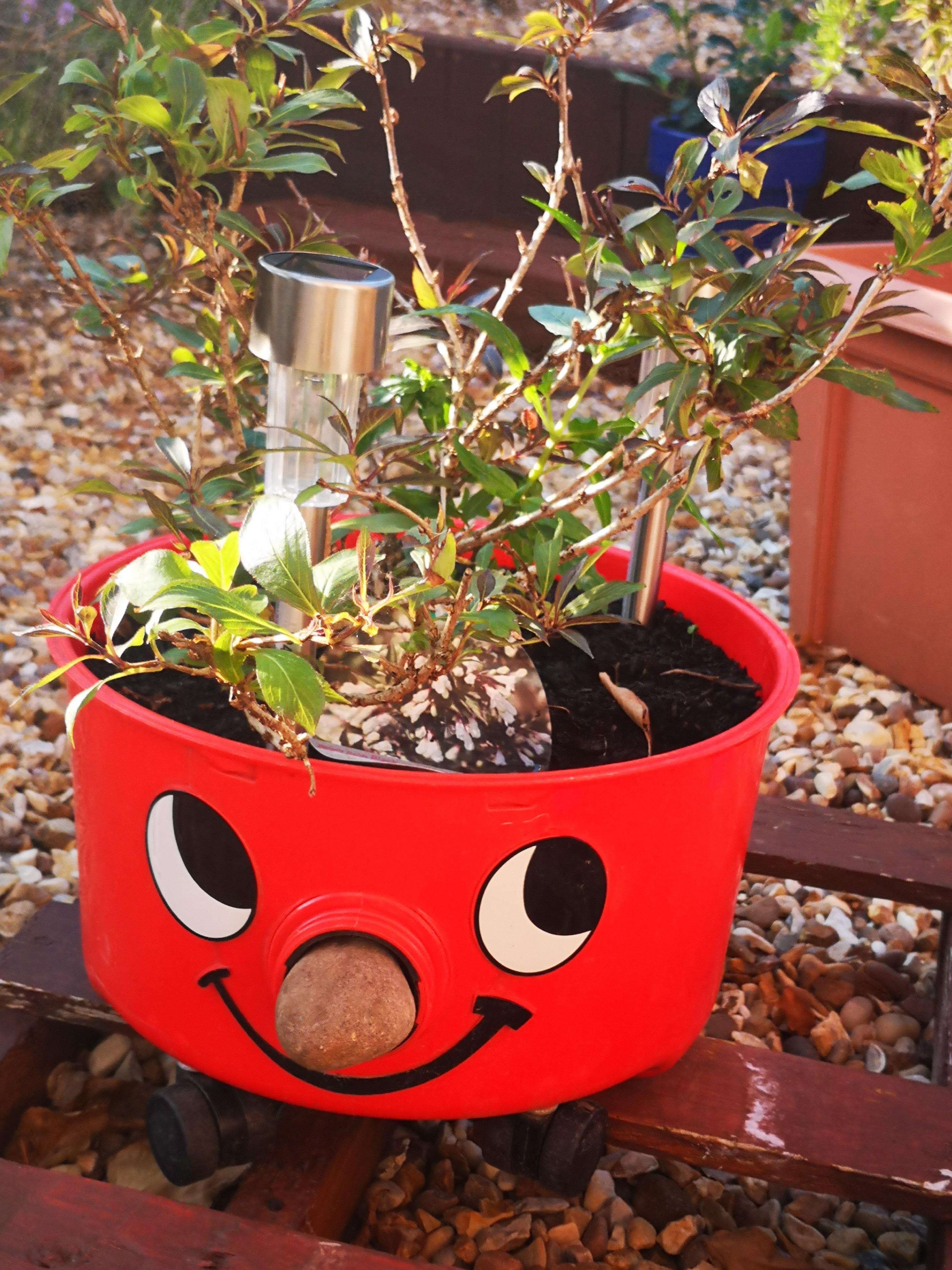 Susan Plater's planter