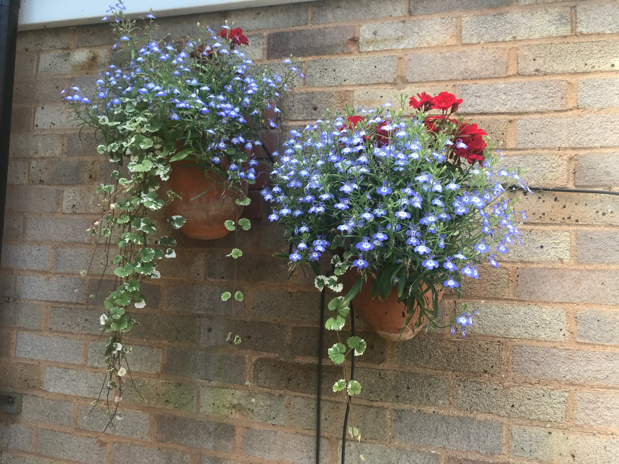 Ruth Crowther's wall planter