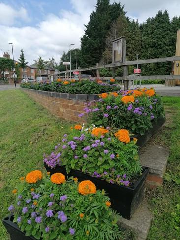 Summer Planting (15).jpg