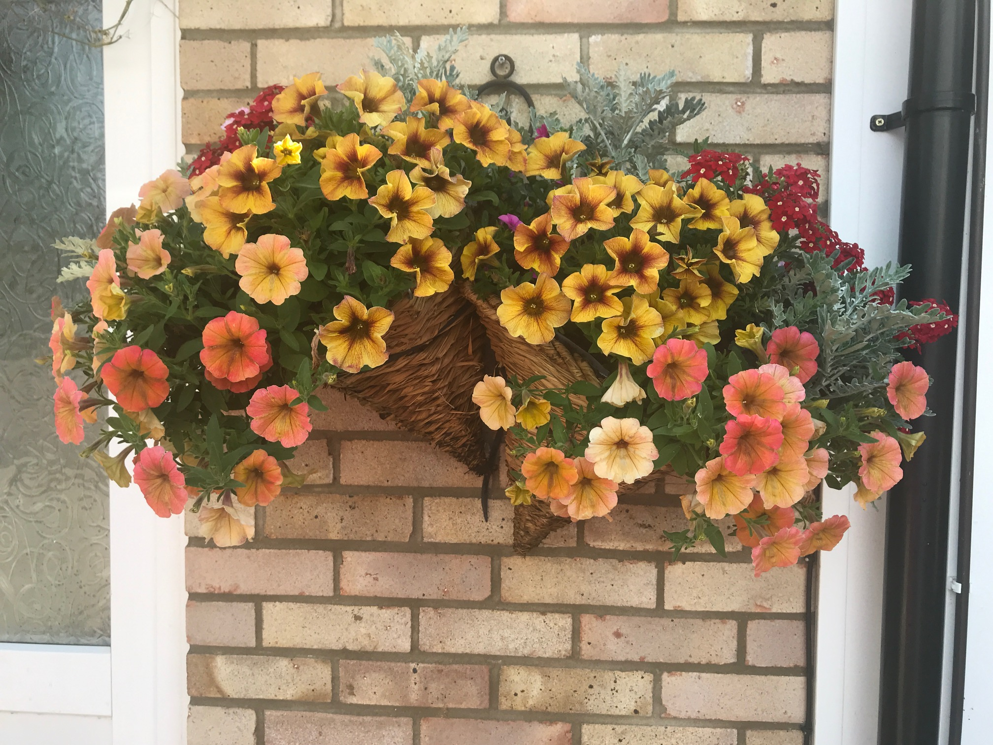 Ruth's hanging basket