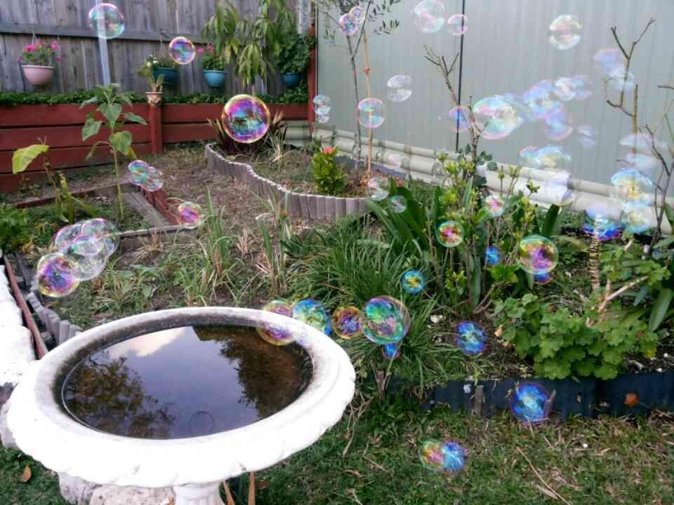 Bird bath for the birds.