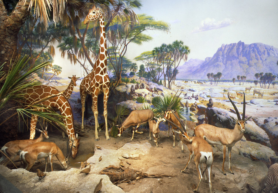 Copyright: © American Museum of Natural History