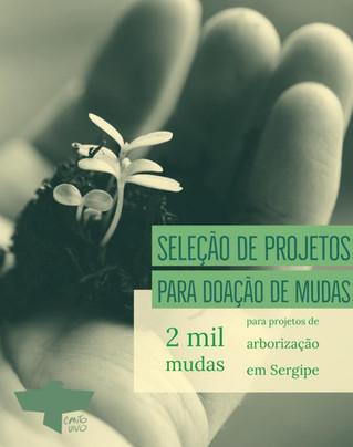 Canto Vivo seleciona projetos de Sergipe para doação de mudas de árvores