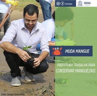 Canto Vivo participa do projeto 'Muda Mangue' em Aracaju