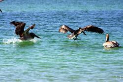 Wild sea life (9)